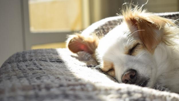 what to do if pet has heatstroke